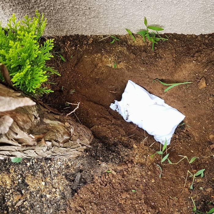 Japanese pet funeral cremation shiba shrine altar bones